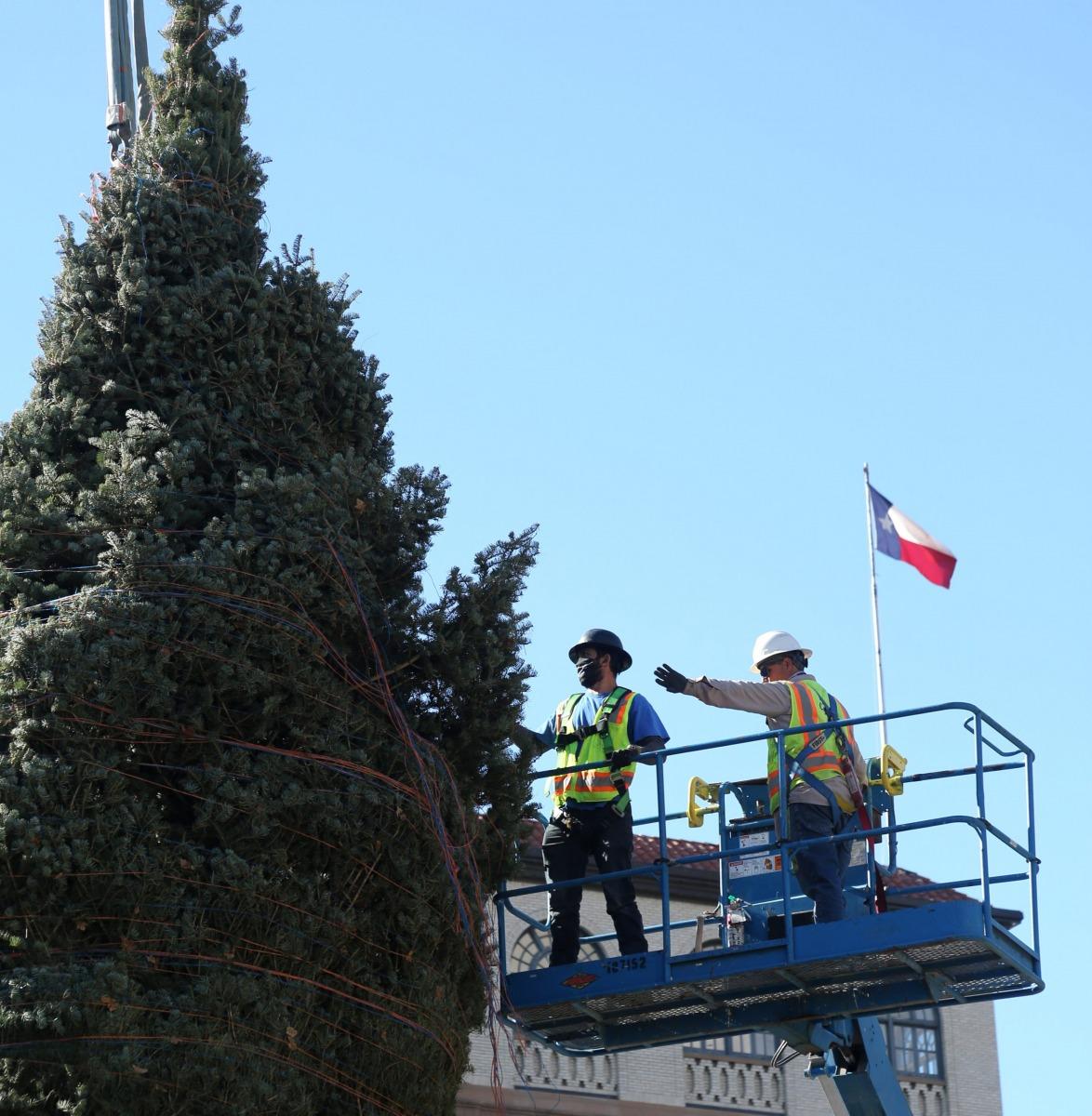 The H-E-B Christmas tree from Northern Michigan arrives Nov. 17, 2020, Travis Park. <em>Photo by Ben Olivo | Heron</em>