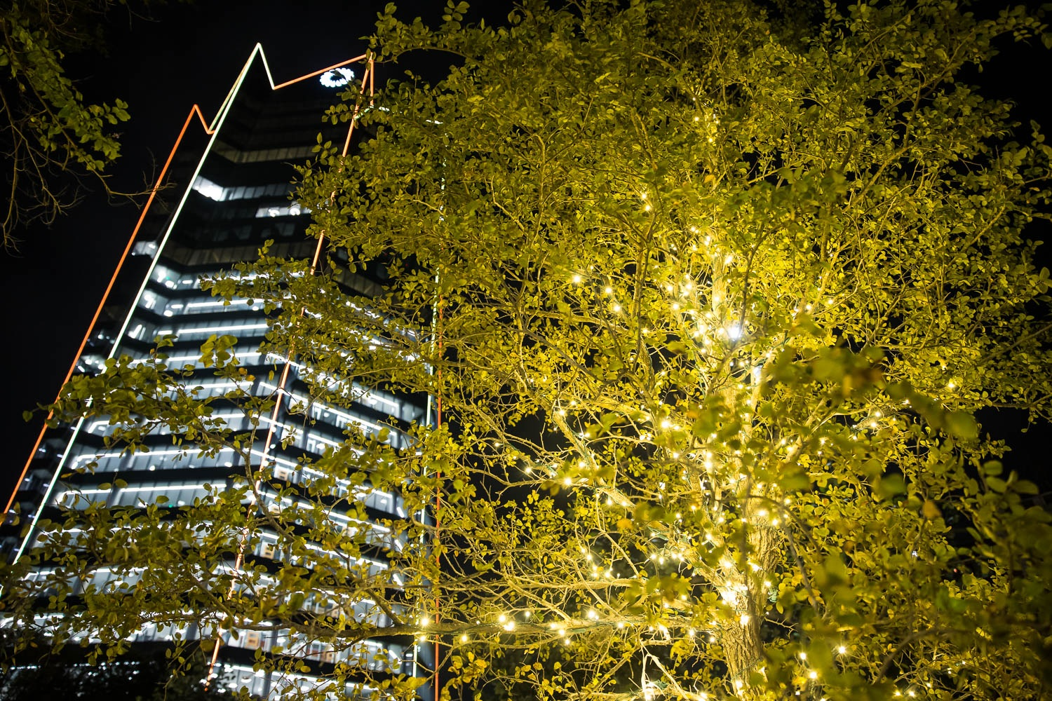 The Frost Tower lit up for the holidays on Nov. 26, 2020. Photo by Stephanie Marquez | Heron contributor