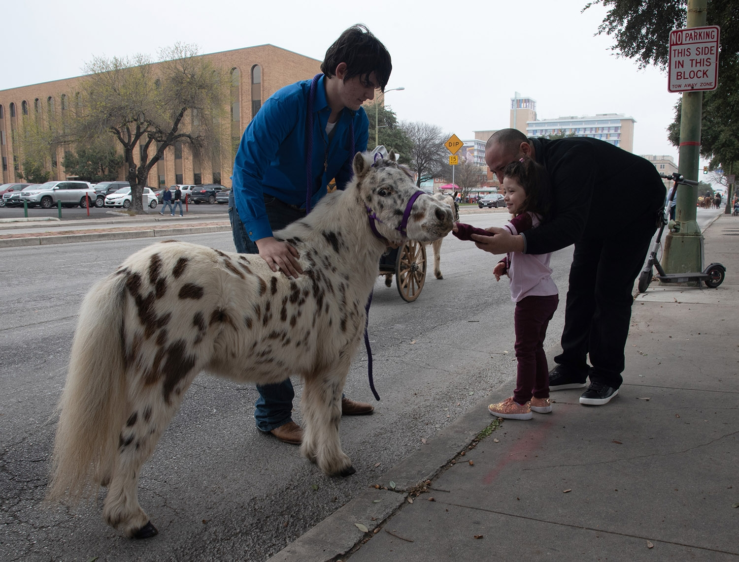 Miniature Pinto Nibbles stands with owner Braden Carlson, 16, while father Vincent Gamez helps daughter Sophi Gamez, 4, pet his nose after the Western Heritage Parade and Cattle Drive Feb. <em><b>V. Finster | Heron</b></em>