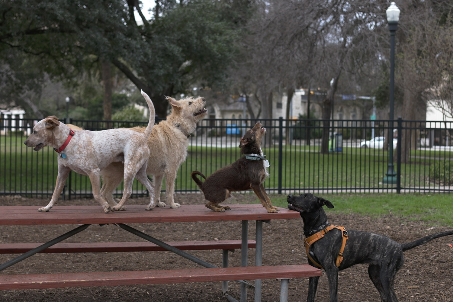 Dogs be dogs at the Madison Square dog park. <b><em>Photo by Noah Alcala Bach | Heron contributor</em></b>